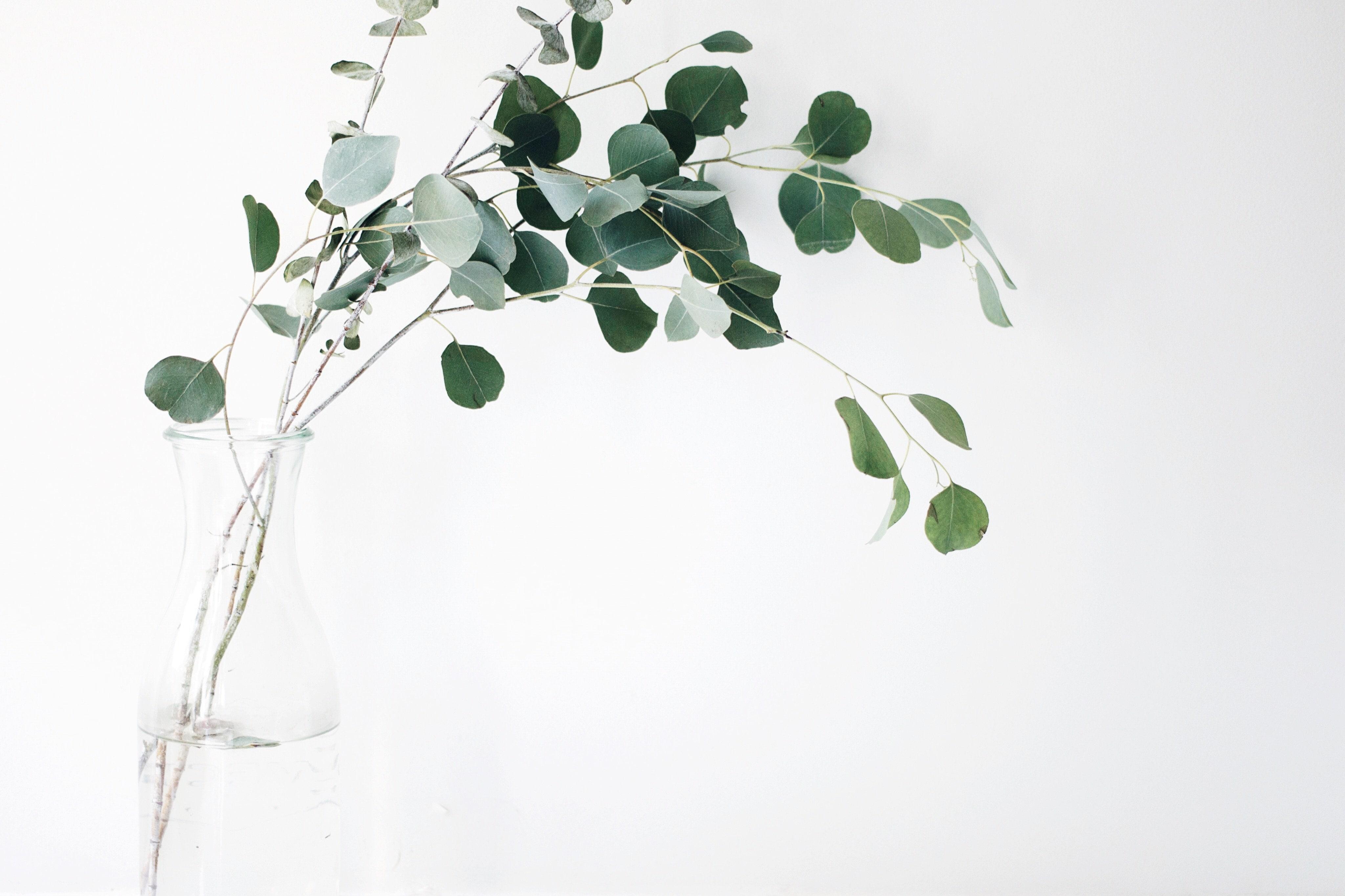 Anregende Öle: Rosmarin, Eucalyptus, Cajeput, Myrte Marokko, Zitrone & Litsea.